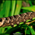 Mariposas nocturnas icon